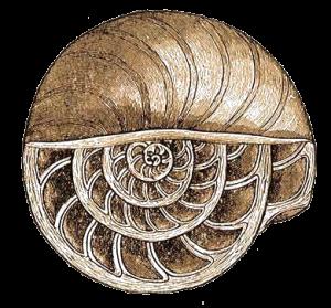 Foraminiferak